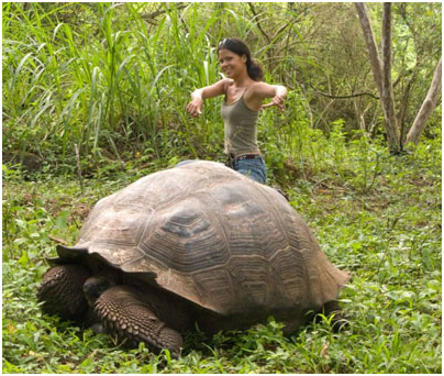 Is a pet tortoise the right choice for you?